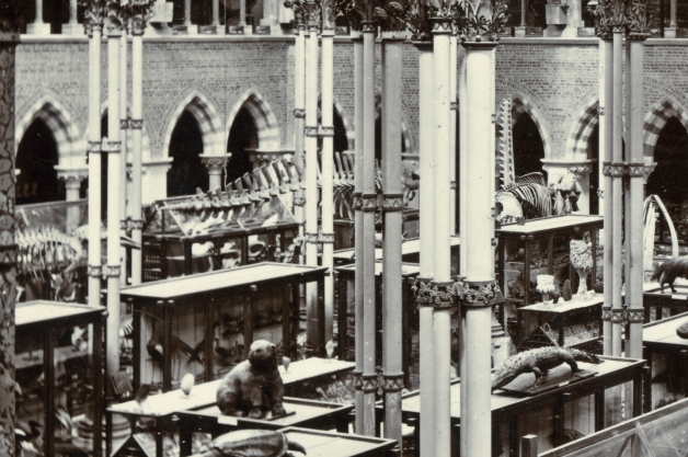 The museum in 1892